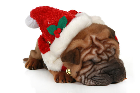 head of a shar pei puppy with santa hat