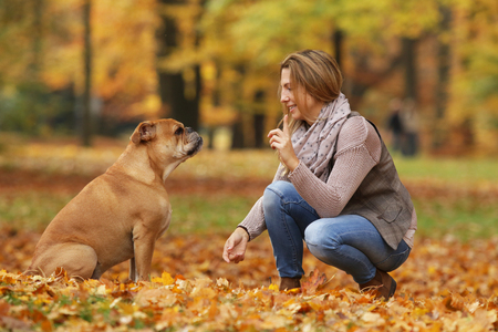 Continental bulldog and its owner holding hand and paw