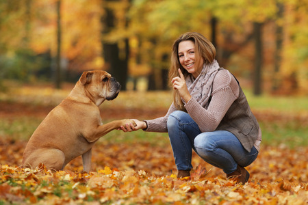 Continental bulldog and its owner holding hand and paw Reklamní fotografie - 111764174