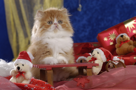 One cute red and white persian kitten sitting on a christmas sleigh Reklamní fotografie - 122879087