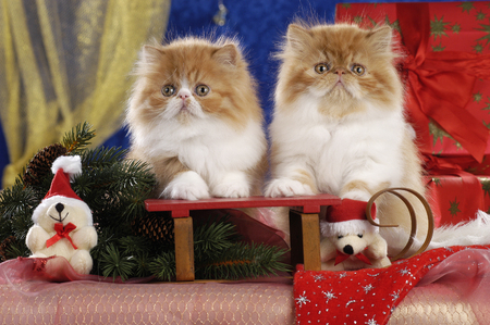 Two kitten on a sleigh in christmas decoration Reklamní fotografie - 111954727