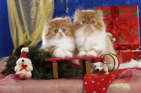 Two kitten on a sleigh in christmas decoration