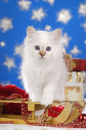Cute kitten on a golden sled with star background