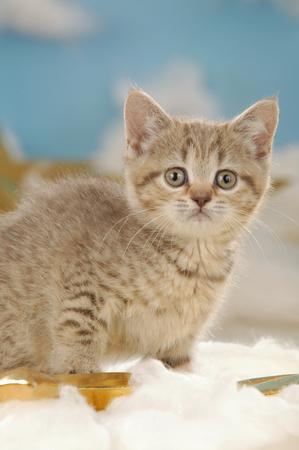 cute little cat sitting in christmas background Reklamní fotografie