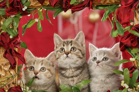 Three christmas kitten in a golden frame on christmas Imagens