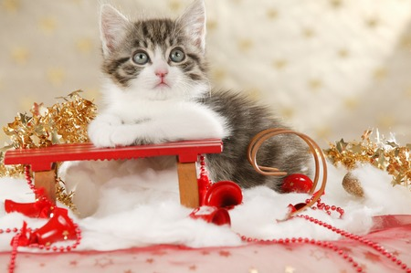 Cute cat on a sleigh in christmas decoration
