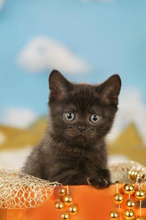 Kitty sitting in an  small  orange box