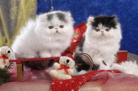 Zwei süße Kätzchen in Weihnachtsdekoration nebeneinander