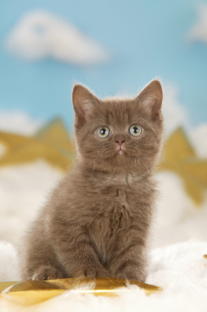 Christmas kitten sitting in a star and heaven background