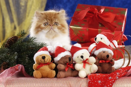 One cute red and white persian kitten sitting on a christmas sleigh Reklamní fotografie