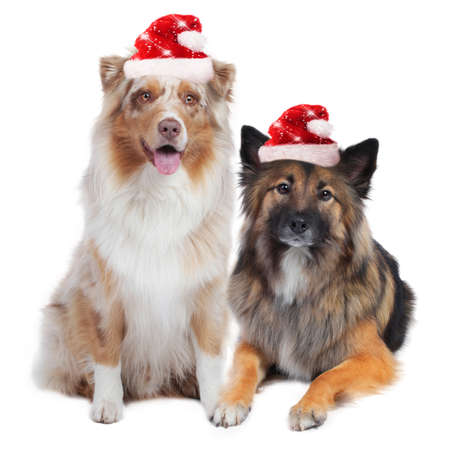 Two cute christmas dogs isolated on white