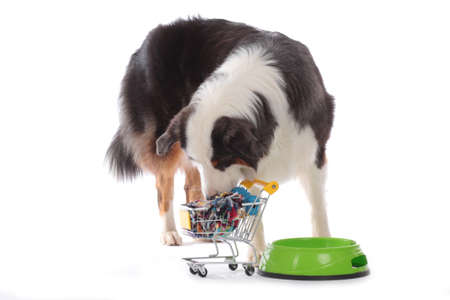 Dog with bowl sniffing in shopping cart isolated on white