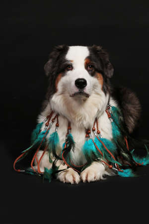Dog with indian feather necklace in front of black background