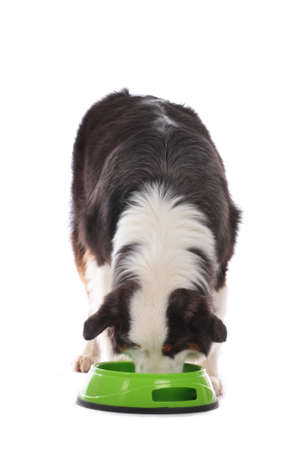 dog eating food out of dog bowl isolated on white Stock Photo
