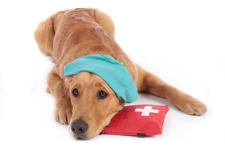Golden Retriever dog with medical costume and emergency kit lying isolated on white background Stock Photo