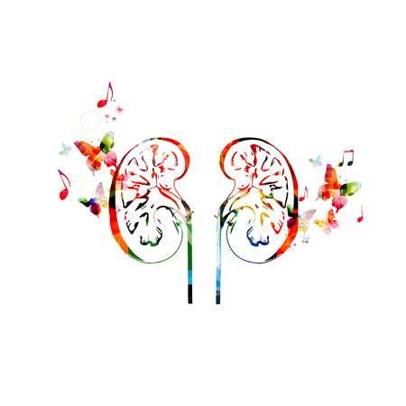 nephrology: Colorful human kidneys design Illustration