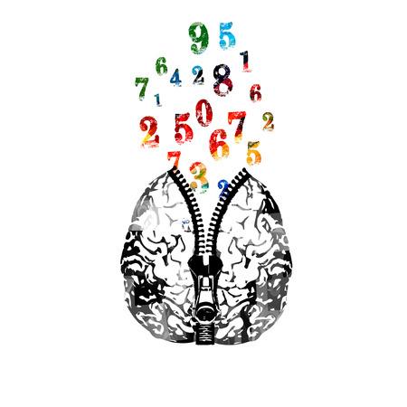 지퍼와 다채로운 숫자 벡터 일러스트 레이 션 인간의 두뇌. 숫자와 창의력의 개념