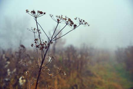 Dry field plant, November 版權商用圖片