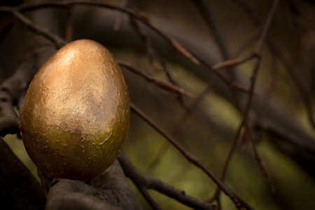 Golden Easter Egg laying on a tree branch. Stock Photo