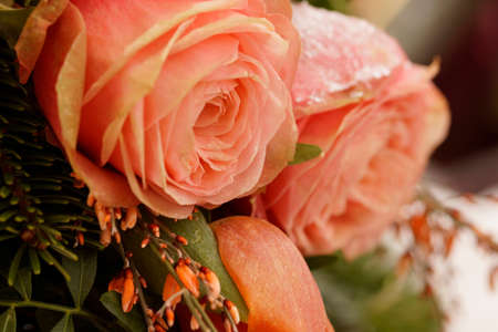 Macro on frozen pink roses. Funeral arrangement
