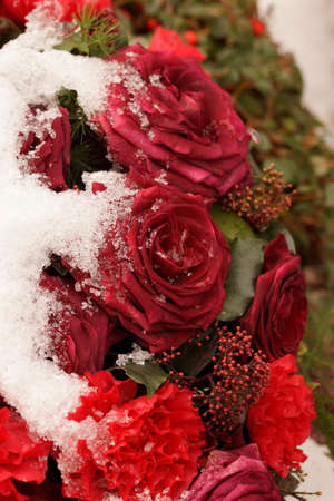 Macro on frozen red roses. Funeral arrangement covered in snow.