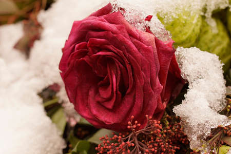 Macro on single frozen red rose. Funeral arrangement covered in snow.