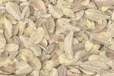 beautiful background photography of fallen leaves of lagerstroemia indica