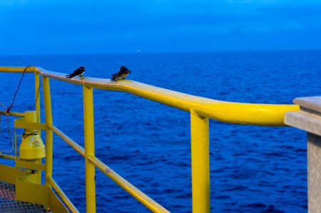 Couple of bird sitting on handrail on offshore jack up drilling rig. Stock Photo