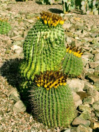 desert plant               Banco de Imagens