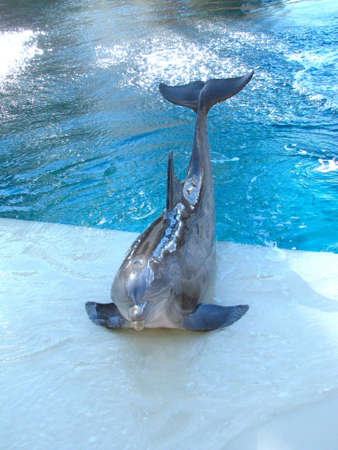 cetacean: dolphin outside the water
