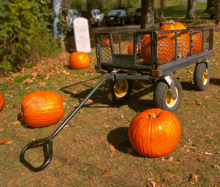 pumpkins in a cart   photo