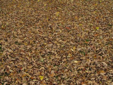 natureal: lascia sul terreno teaxture Archivio Fotografico