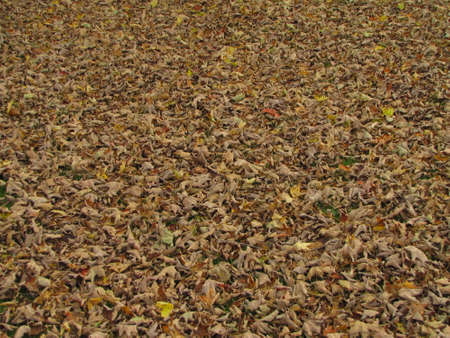 natureal: leaves on the ground teaxture