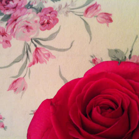Close up red rose on rosy table cloth