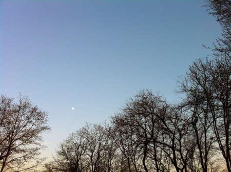 Small moon between trees