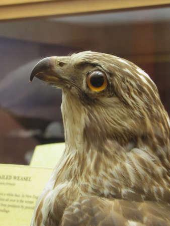Falcon in  Boston museum of Science Redakční