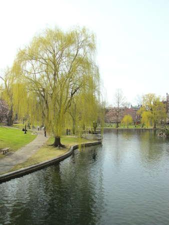 Spring Arrives at Boston Public Garden- 2011 Stock Photo