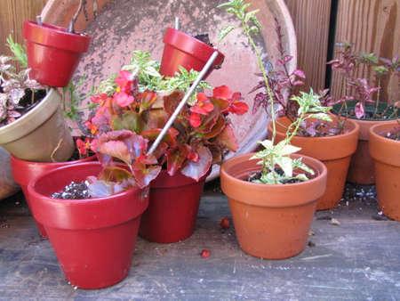 plant pots on the floor