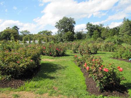Elizabeth Park, in Hartford, Connecticut