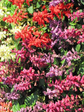 garden of flowers close up Imagens