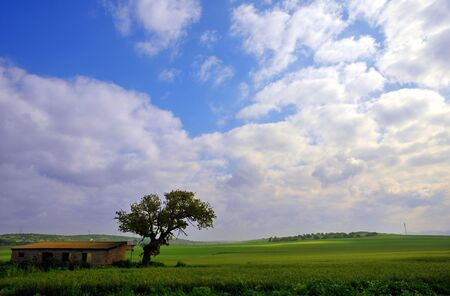 Barn House and a green Wheat Field Stock Photo - 6594851
