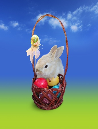Cute Easter bunny  with Easter eggs basket, isolated over blue - green background Foto de archivo