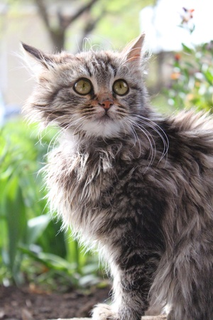 Cute fluffy kitten in the garden  Animal, mammal, domestic cat