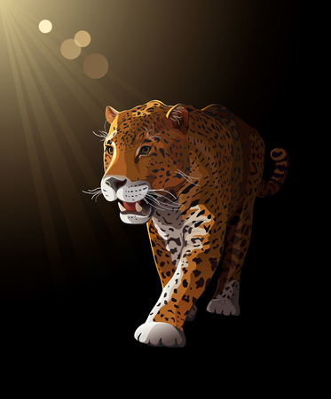 Jaguar, wild cat Panther by night, moonlight  Vector illustration