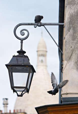 montmartre: Pigeons Montmartre Sacre Coeur avec la couleur Banque d'images