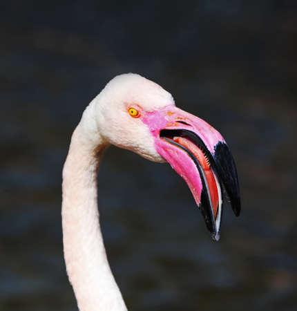 Flamingo beak, the best fishing tool photo