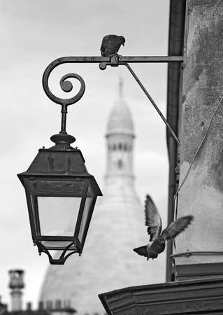 Montmartre pigeons with Sacre Coeur in bw Stock Photo