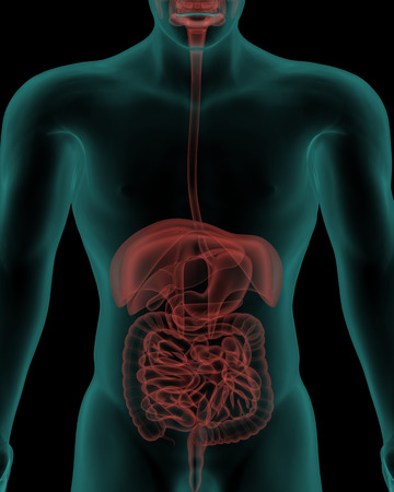 Human Body With Digestive System Internal Organs In X-ray View Stock ...