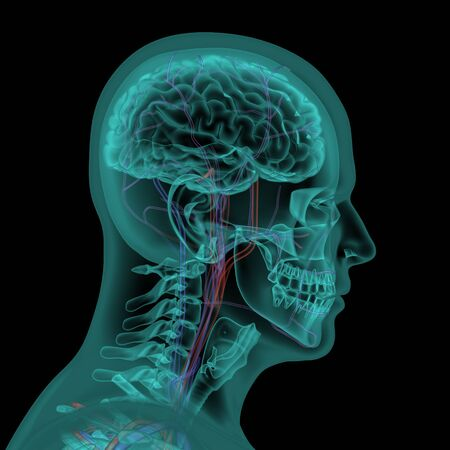capillary: Human head with circulatory system in x-ray view Stock Photo