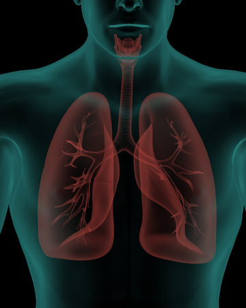 alveolus: Human body with respiratory system internal organs in x-ray view Stock Photo